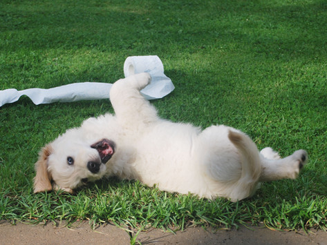 The Penbode Pet Vets Puppy Book