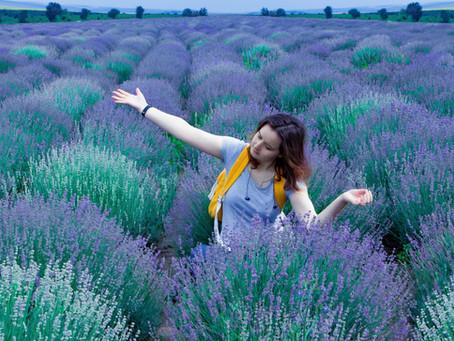 Lavender, Lavender, Where Are You?