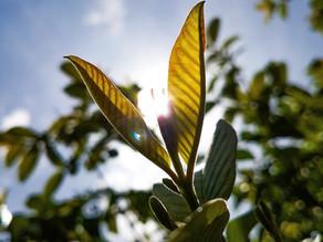 Quais os tipos de tropismo em plantas?