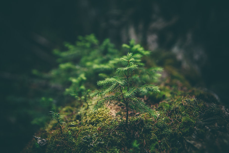 Small tree in a forest
