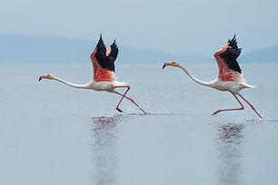 Image by Dattatreya Patra