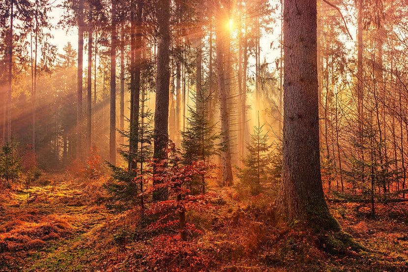 Healthy natural woodland
