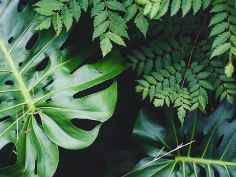Plants + Shop