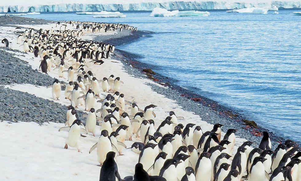 Penguins LIVE!