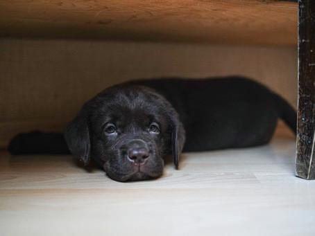 Daftar Penyakit Anjing Di Musim Hujan Yang Sering Menyerang