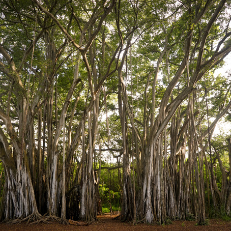 BSE & NYSE: Tales 'from under the Banyan Tree'