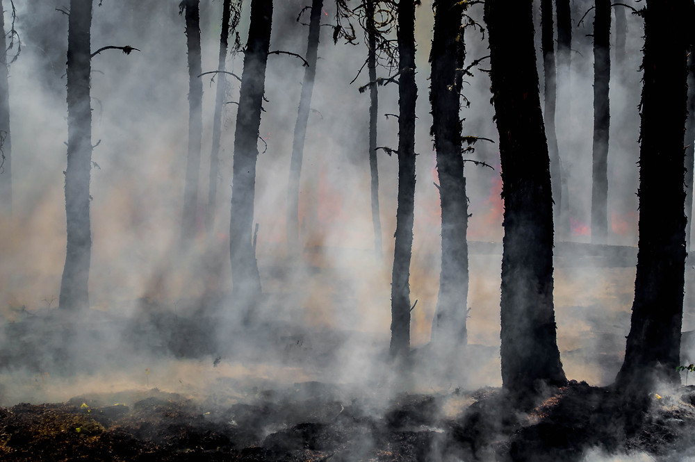 wildfire smoke in the forest