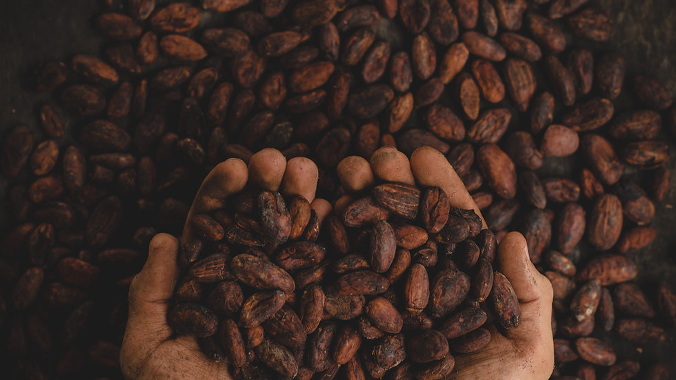 Organic Cacao Beans - Unroasted - Ceremonial Grade