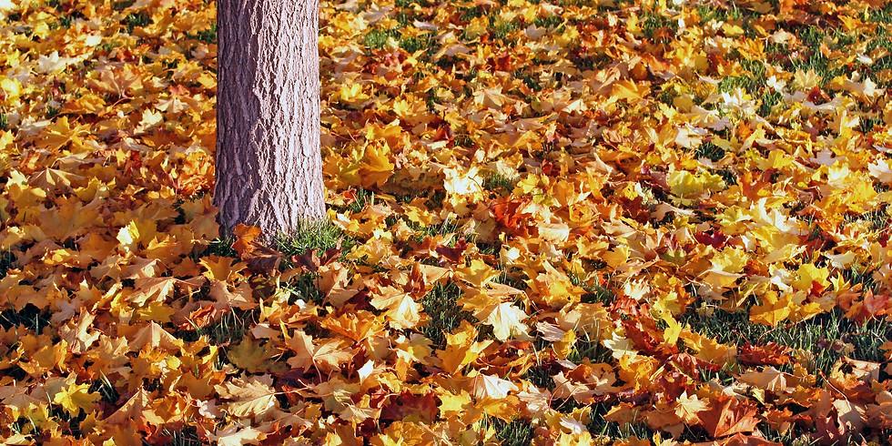 Leaf Raking in Tower Park