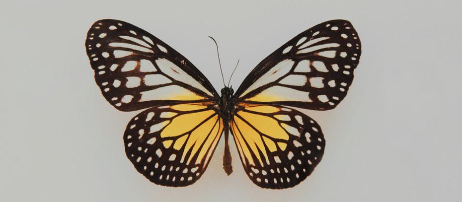 Öykü- Samanta Schweblin- Kelebekler