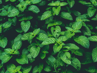 How to grow these six immunity-boosting plants at home