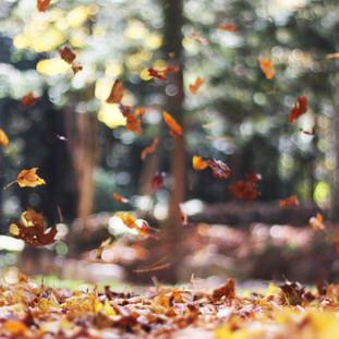 Leven met seizoenen