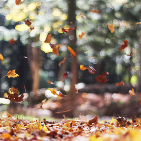 Los Angeles: The Rebirth of Fall (Or Why It's My Favorite Season)
