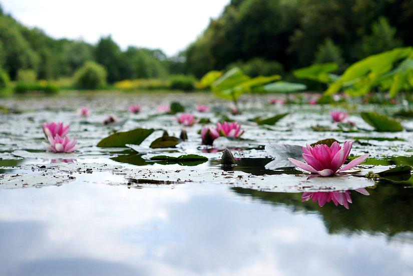 Lotus Flower Diffuser