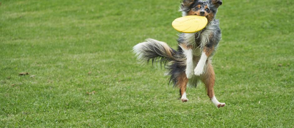Asimov, il cane e il frisbee.