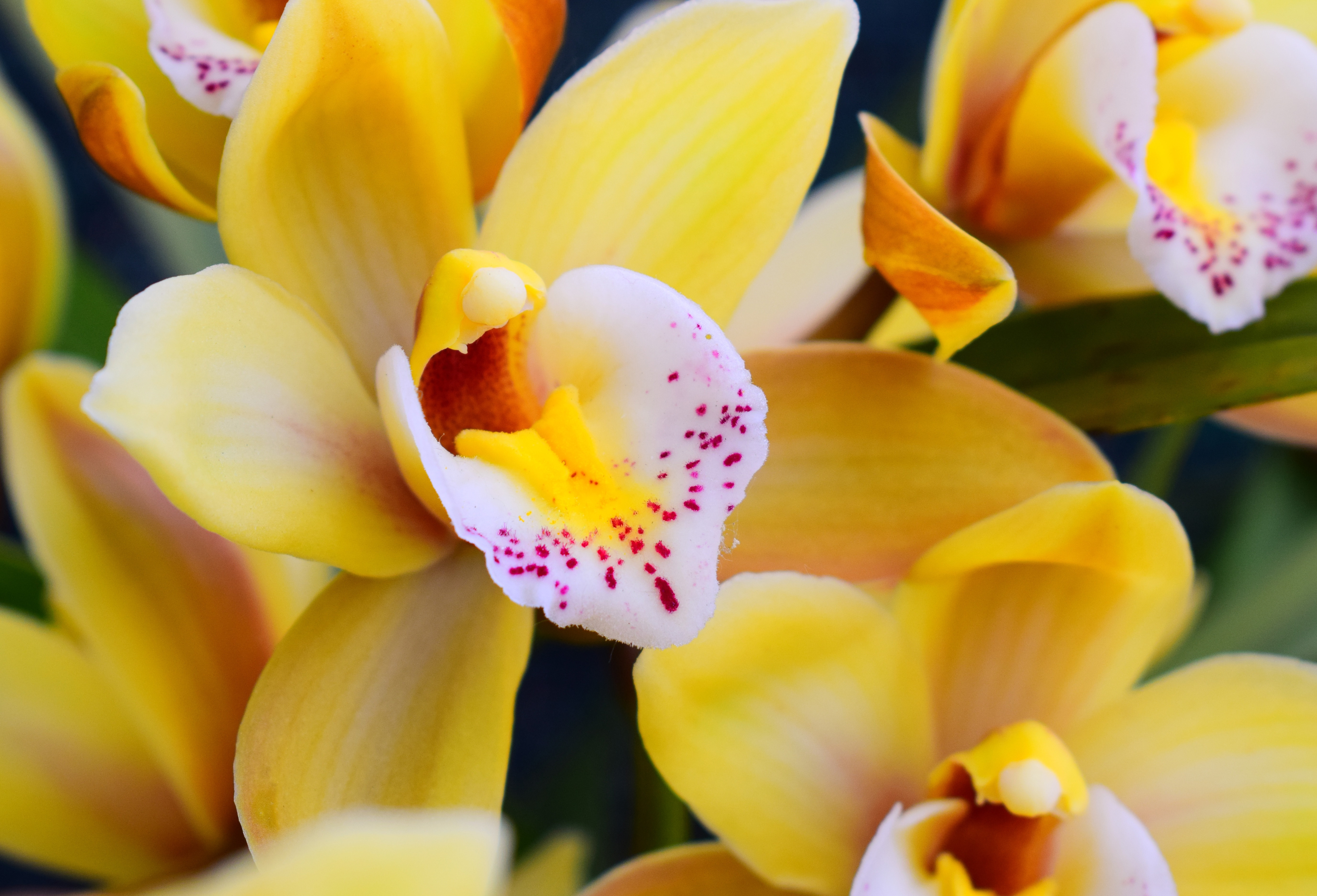 Orchid Session