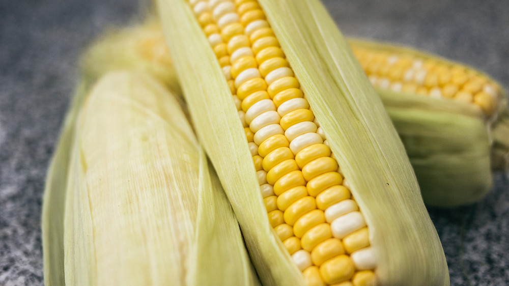 Sacred Plant Co Hybrid Sweet Corn