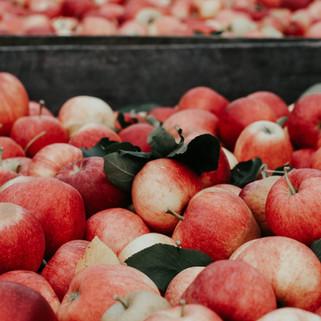 Transformateur Agro-alimentaire
