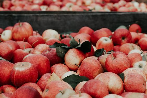 Image by Joanna Nix-Walkup zerwane, czerwone jabłka