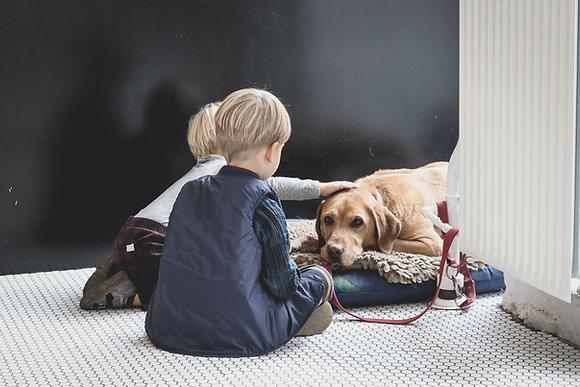 Dziecko i pies pod jednym dachem - projekt dla rodziców, terapeutów z cert