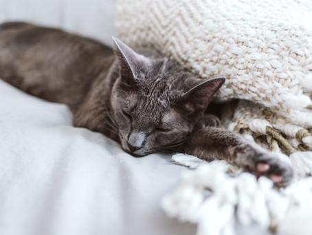 Paracetamol, Obat Bagi Manusia Namun Racun Bagi Kucing