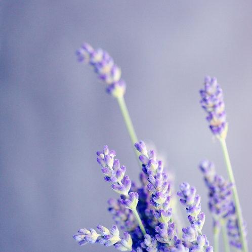 Lavender Fields Shea Butter Soap