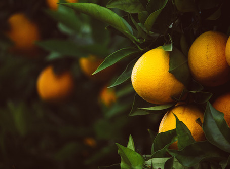 Lay down your lemon - why bergamot is the king of citrus