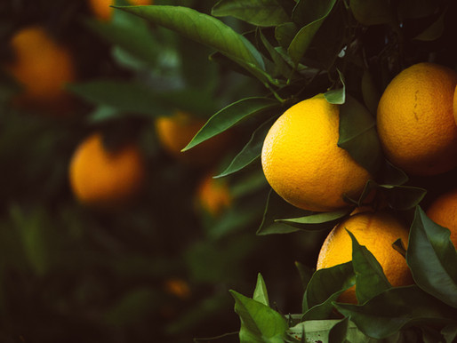 How to grow Lemon Trees from seeds