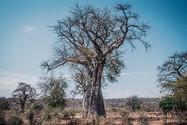 Image by Nqobile Vundla