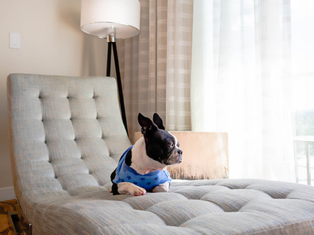 Designing your home for your dog... and you.