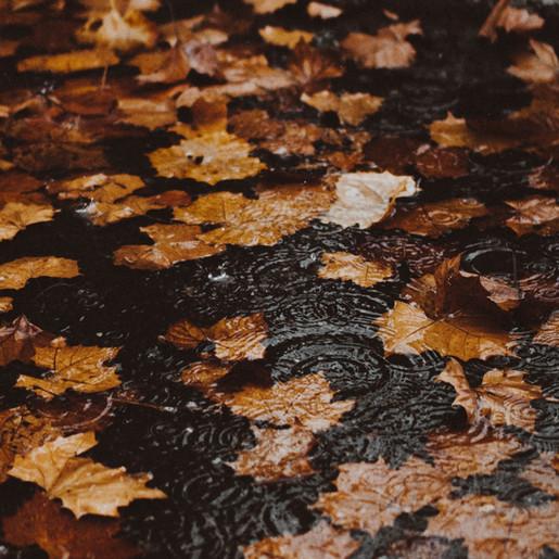 WEERBERICHT: Herfstachtig met regelmatig regen