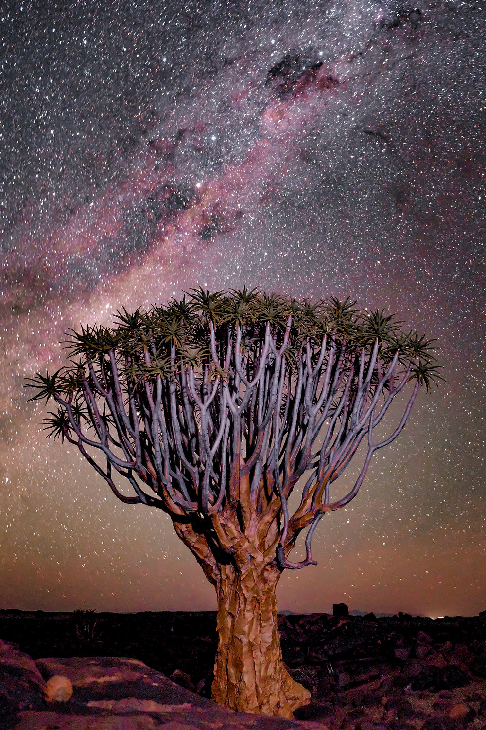 Make a stop in the Quiver Tree Forest on your roadtrip to Namibia