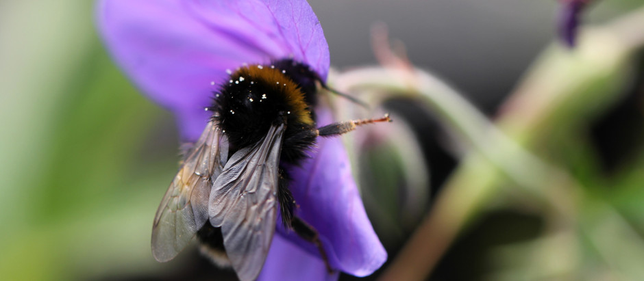 Why Are Bees So Important to the Environment?