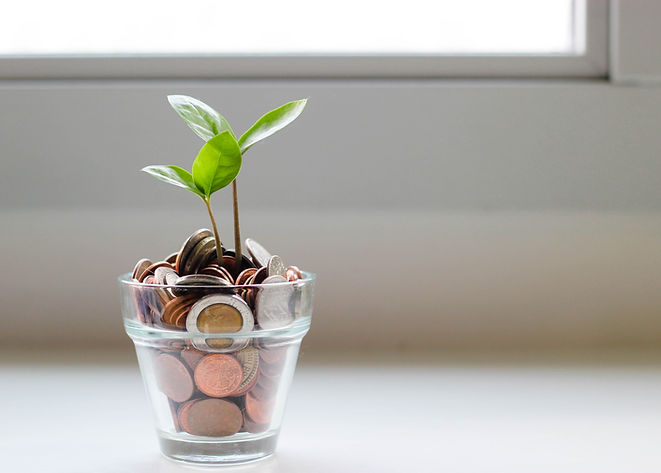 Image of a money plant