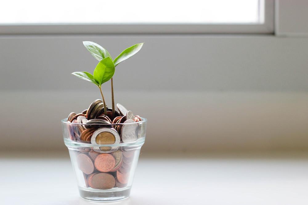 עלה שפורח מתוך כוס עם מטבעות