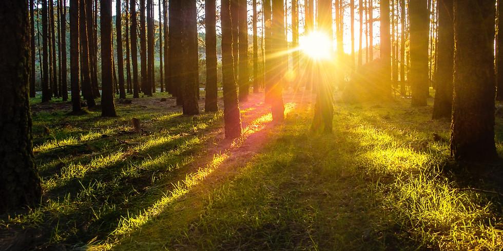 Hypnotischer Waldspaziergang