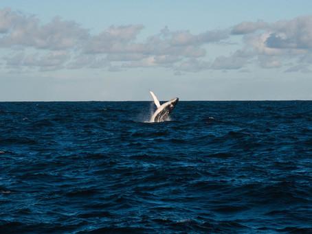 Les baleines et l'impermanence