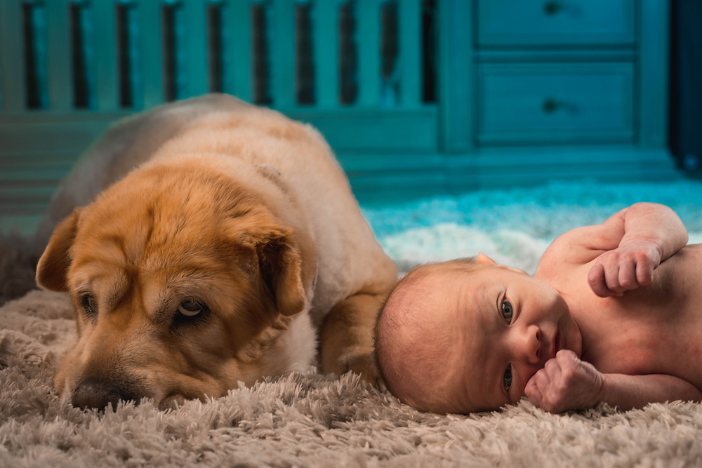 Can a dog be jealous of a baby?
