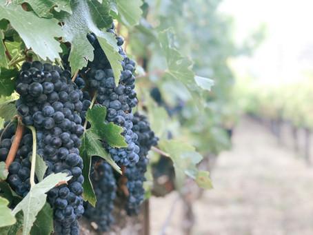 Argentina: where Malbec found its terroir
