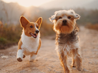 Why Owning a Pet is Good for Your Health
