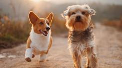 Pet shops e veterinários