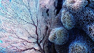 Image de Tomoe Steineck ohophonie, passerelle institut, pezenas, occitanie