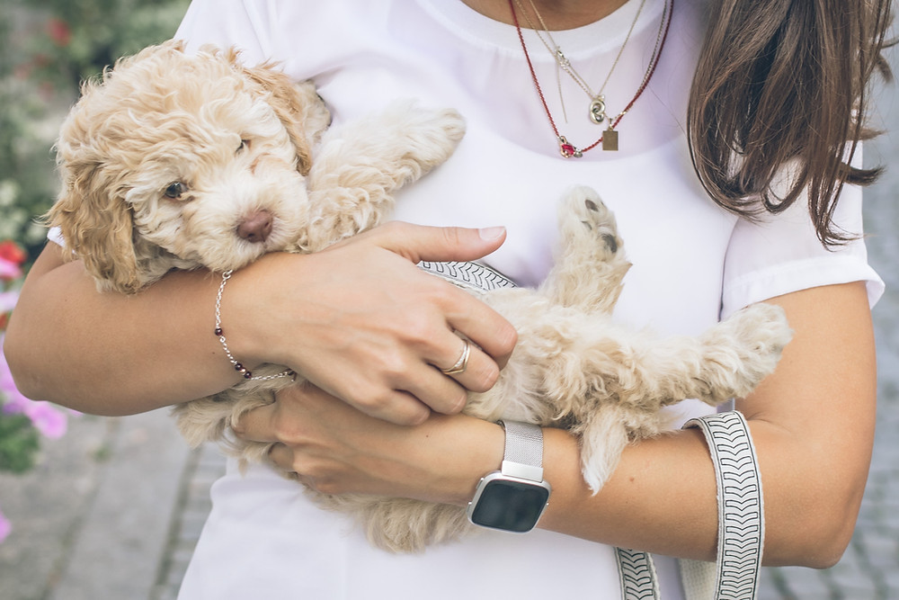 new puppy recommendations - girl holding puppy - Cuyamaca Animal Hospital - Santee, San Diego