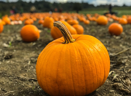 Functional Foods: Oh My Gourd, Here's Pumpkin to Talk About