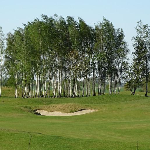 289 klimaatbomen in nieuw stadsbos Tongeren