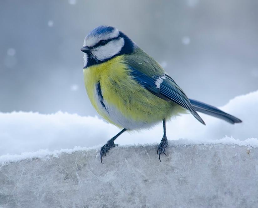 Doe mee met de vogeltelling 2021