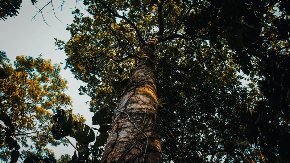 Ganadores Concurso de Poesía: Bosques para la vida