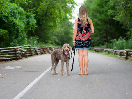 Importance of Good Dog Manners