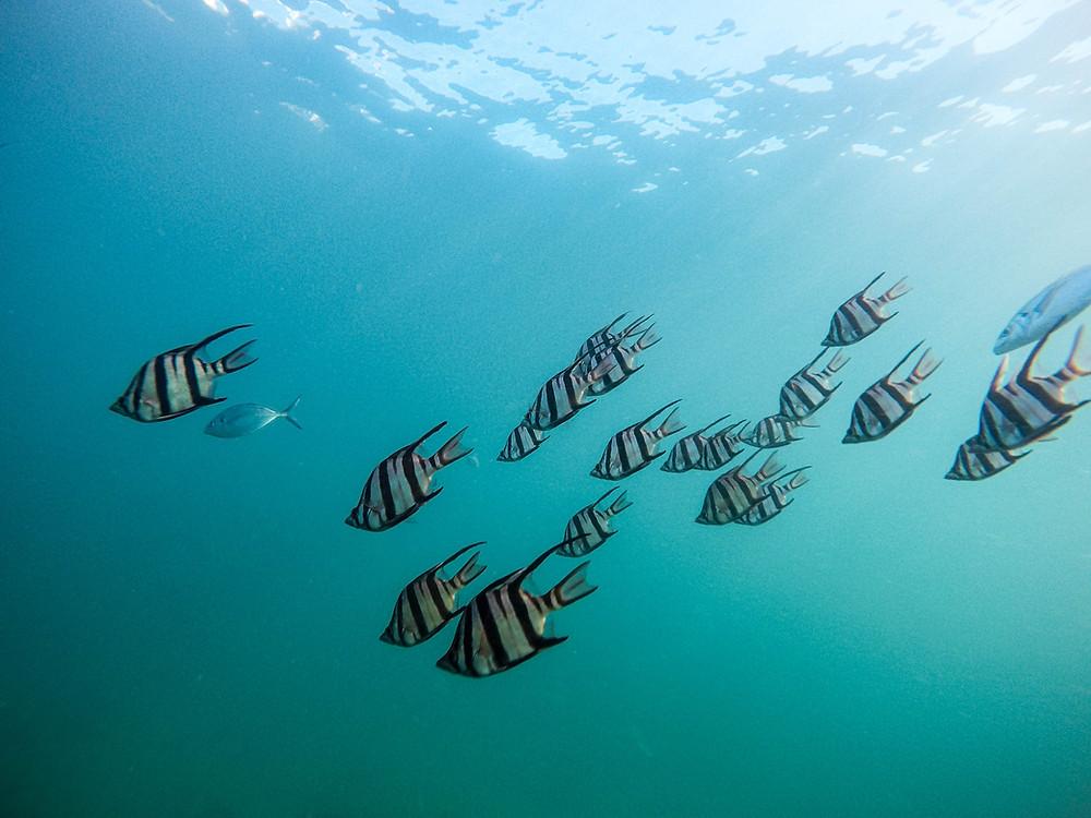 Snorkeling, fish