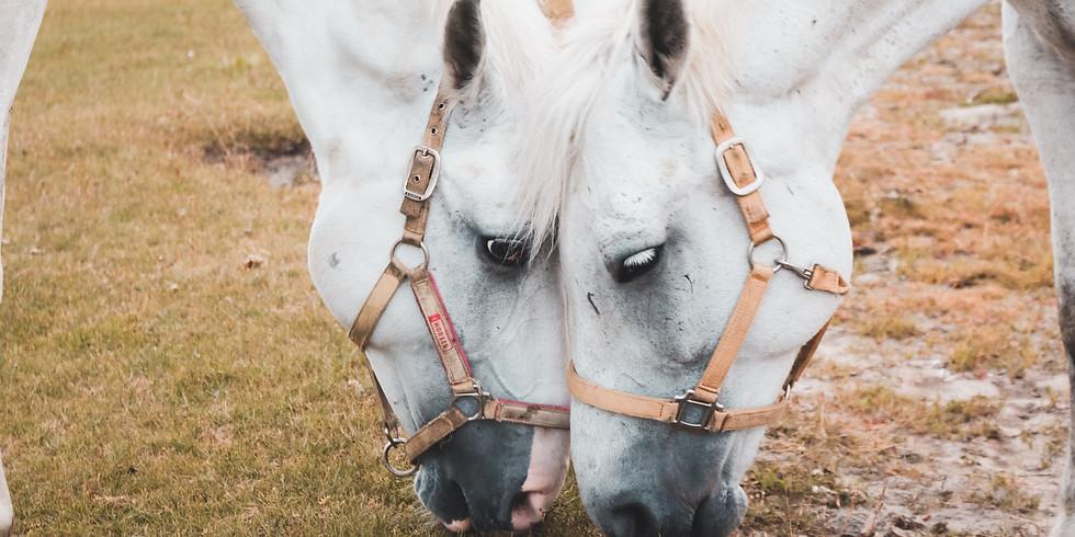 Valentine's Horse Camp